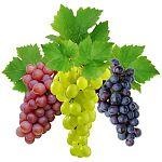 изображение винограда